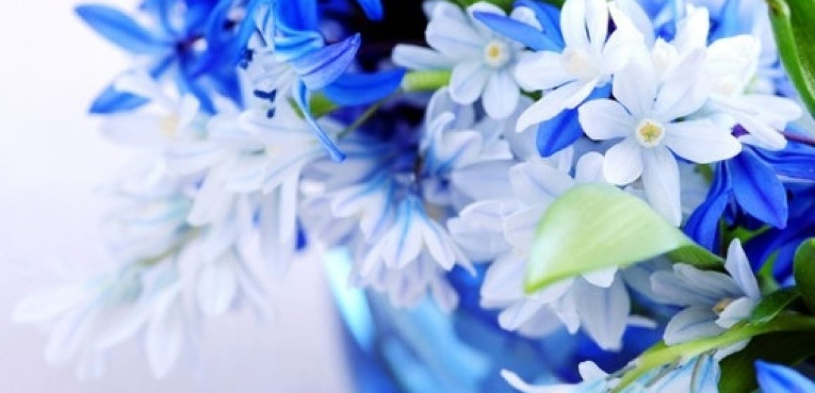 beautiful_blue_flowers_01_hd_picture_166920